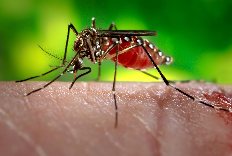 This is a article on Zika virus their Causes , Symptoms and Treatment by Dr Arora and Team.